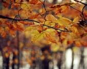 Autumn Colors- Fine Art Photograph, October, fall, nature photography
