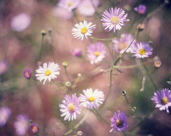 Purple Spring - 8x10 Fine Art Photograph