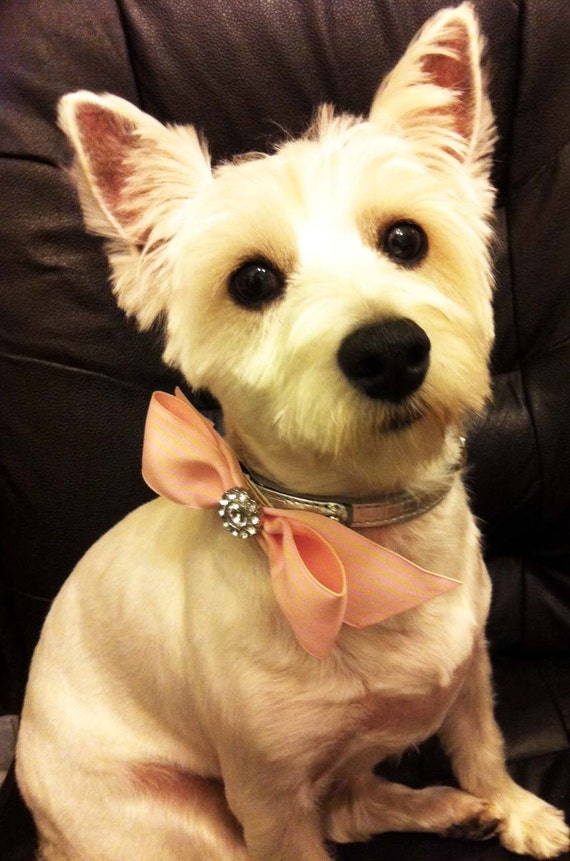 Dog Collar Bling - Rhinestone/Pearl Velcro Bow