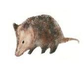 Possum 5x7 art print giclee brown Texas Opossum nature animal woodland red tile studio