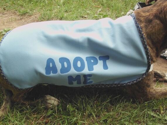 Dog Adopt Me Vest XL Light Blue with Blue Patterned Trim