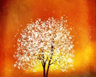 Amber Glow -- 8x10  Tree Art Print