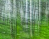 Forest Impression Abstract of Birch Trees during a long camera exposure while moving the camera No.028 - A Fine Art  Landscape Photograph