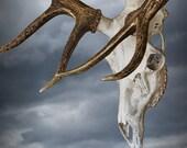 Elk Skull with Rack against a Cloudy Sky a Fine Art Photo - RandyNyhofPhotos