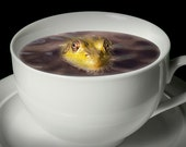 Yikes there is a Frog in my Java A Fine Art Surreal Fantasy Photograph with Coffee Cup and Frog