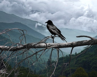 A Common Black Raven over looking the Smokey Mountains - A Bird Nature Photograph