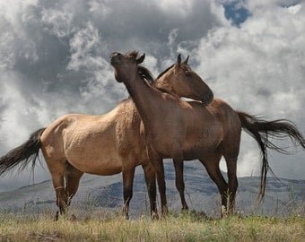 Montana Horses near Glacier National Park - An Animal Wildlife Western Photograph