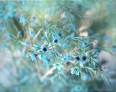 Frost - Winter Photograph - Cool Blue Frosty Flowers - Aqua Teal - Holiday Decor - Chill Ice Mint Icy Floral - Hanukkah - Peacock