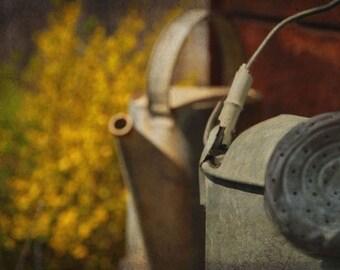 Watering Can - 8 X 10 Photograph - Gardening Garden Gardener - Spring - Golden Yellow, Gray, Green, Brown - Rustic Decor - Country