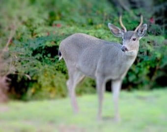 You Are So Deer A Signed Fine Art Photograph