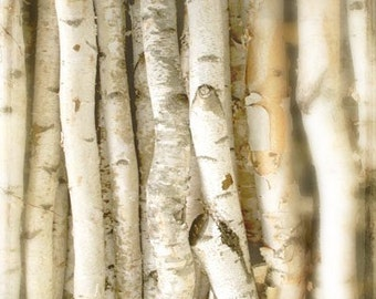 Close To Me - Photograph - Nature Photography - Birch Bark Tree - Winter White - Forest Neutral Decor- 8x10 Photo - Hostess Gift