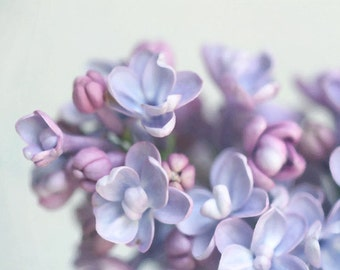 Lilac II - Photography - Flower Floral - Lavender Purple Periwinkle Aqua Bloom - Lilacs - Mothers Day Gift - Spring Summer Easter - Feminine