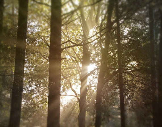 Enter The Forest II - Photograph Photography - Woodland Nature Tree Trees Light Fog Sun - Mystical Magic Enchanting Sunrise - Brown Green