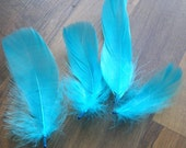 Turquoise Blue Loose Goose Feathers B