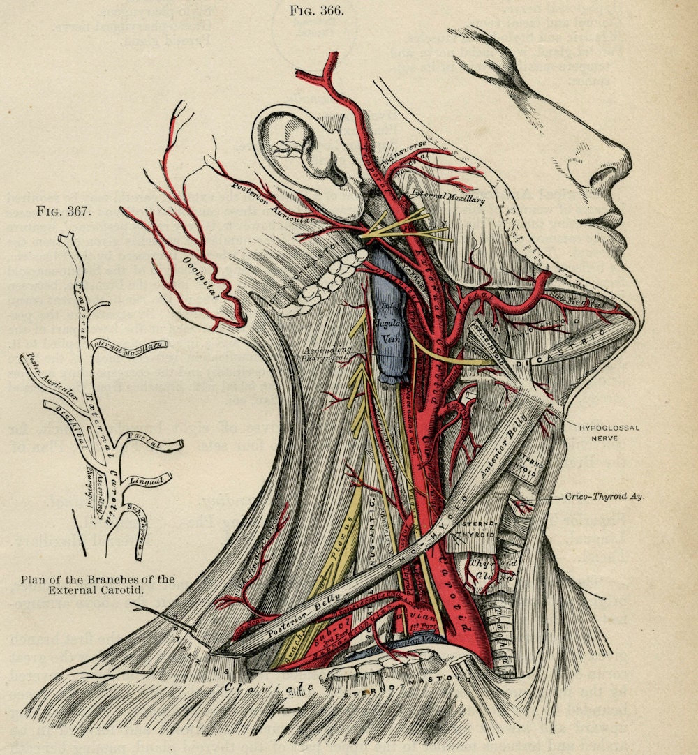 From Anatomy to Phrenology: Collectible Medical Books