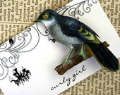 THE BIRDS brooch collection