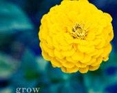 Yellow Flower - 5x5 Photograph - Grow