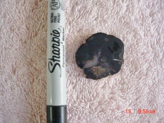 Petrified Wood Limb Cast Cab Dark Brown Tumble Polished Free Form Wrap -1