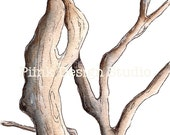 PRINT- Branches (5in x 7in)