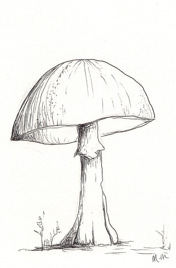 Mushroom Sketch Single Original Pen And Ink 4in X6in