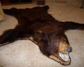 Authentic 1940s Black Bear Rug