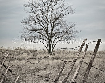 Photograph Tree Withered Print