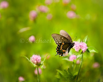 Butterfly Photograph Print