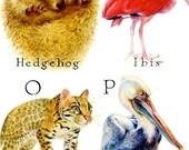 Animal Alphabet Poster by Marlene McLoughlin