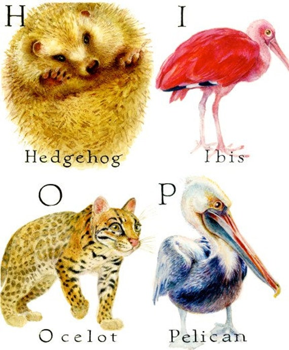 Animal Alphabet Poster by Marlene McLoughlin