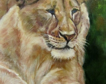 "Lioness lion animal wildlife cat original art oil painting modern realism on 5"" x 7"" canvas by Sandra Cutrer Fine Art"
