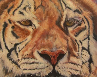 "Tiger wildlife animal cat oil painting original art modern realism on 8"" x 10"" professional artist panel by Sandra Cutrer Fine Art"
