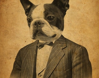 Boston Terrier Art  - Boston Terrier Art Print - Dog in a Suit - 8x10 Print