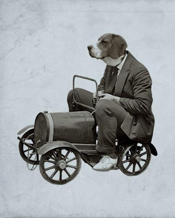A Beagle Driving a Tiny Car 8x10