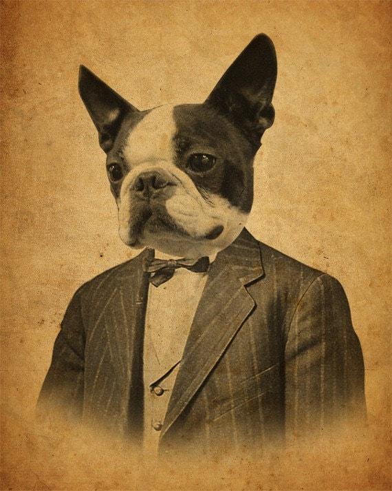 Boston Terrier Art  - Boston Terrier Art Print - Dog in a Suit - 8x10 Print