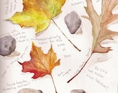 "Leaves and Stones, Original Watercolor 8"" x 10"" Autumn Painting"