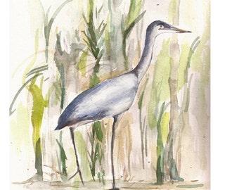 """Great Blue Heron, Original Watercolor 8"""" x 10"""""""