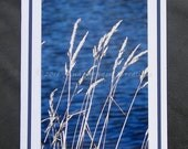 White Grass Blue Water Blank Photo Greeting Card