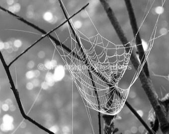 Dewy Web Black & White Photograph