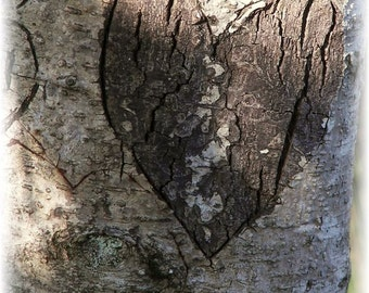 Carving of a Heart on a Tree Photograph