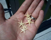 Coastal Home Decor Tiny Natural Starfish for Lockets, Display, Arts and Crafts Supplies