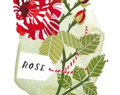 Candy-stripe Rose - Archival art print