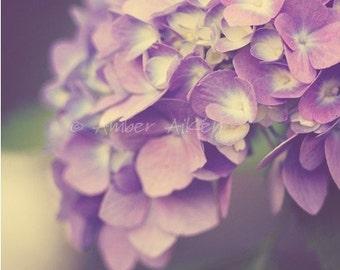 Endless Summer Hydrangea - 8x10 - Fine Art Photograph