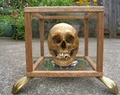 Antiqued Custom Lighted Display Case With Cast Bronze Feet