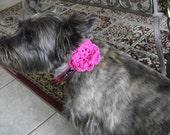 Dog Collar FIDO FLOWERS (Hand  Crochet Flowers for Pet Collar)