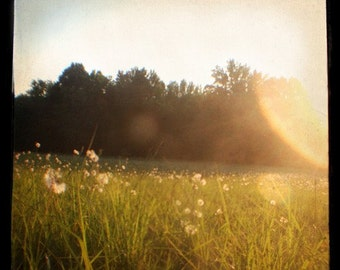 Dandelion Field - Dreamy - Sunflare - Summer - Nostalgia - Sunset