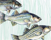Fish Art- ORIGINAL Ink Drawing - Striped Bass School of Fish - HAND DRAWN 5x7""