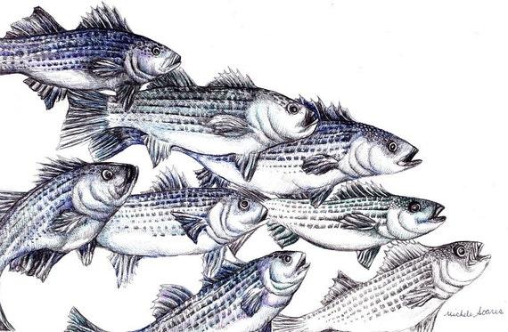 Fish Art Print - Striped Bass Ink Drawing Giclee Print - Fish Illustration - Nautical Wall Decor - Fish Wall Art - Fishing Gift