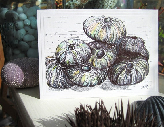 Pen and Ink Drawing Sea Urchin Art Card - Sea Anemone- Original hand drawn card