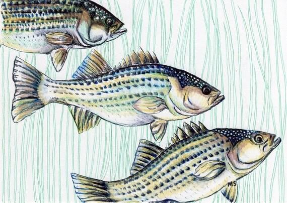 """Fish Art- ORIGINAL Ink Drawing - Striped Bass School of Fish - HAND DRAWN 5x7"""""""