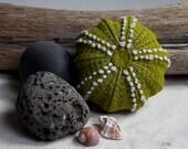 Green Sea Urchin Shell